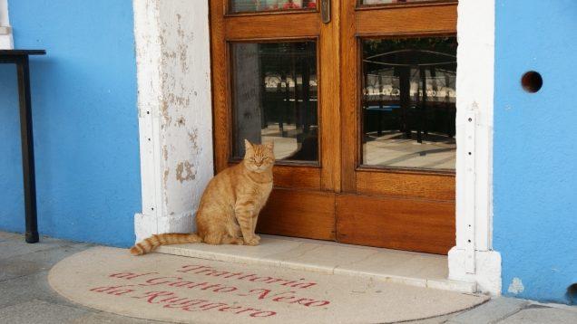 ホテルの前にたたずむ猫